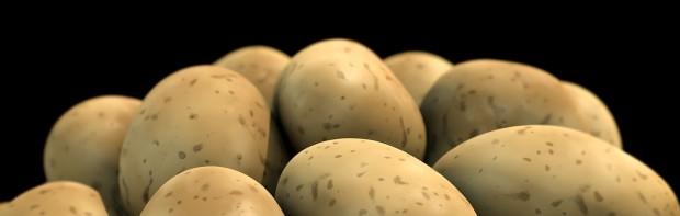 potato-1463423_1280