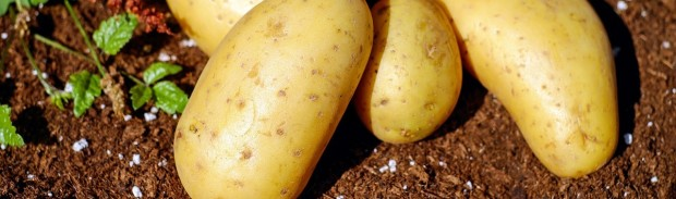 potatoes-1585075_1280