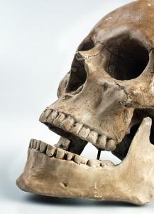 skull-517594_1280