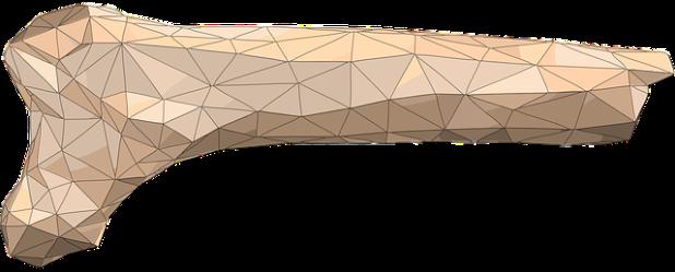 bone-978054_640