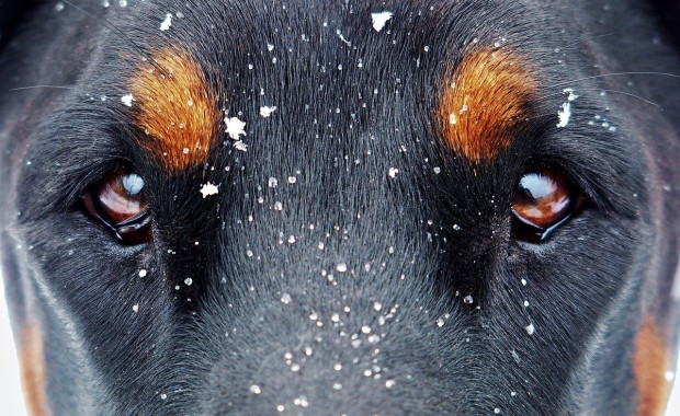 eyes-and-the-snow-flakes-1133707_1280