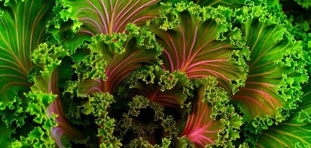 plant-690051_640
