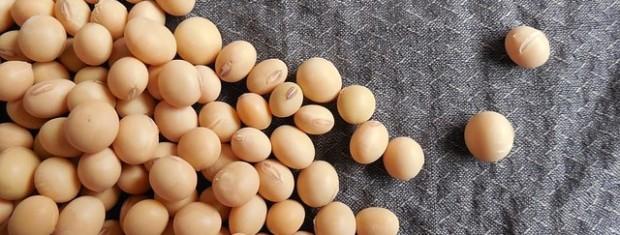 soybeans-182295_640.jpg